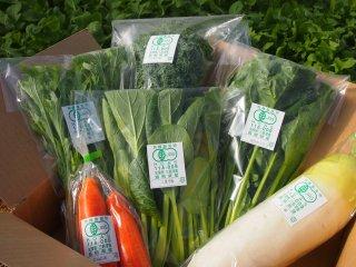 【まずはお試し】 お任せ有機野菜セット(6種+おまけ付き)