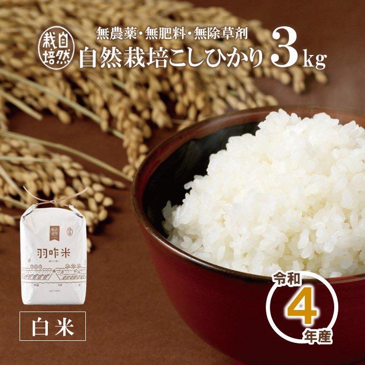 A001 令和2年産【無農薬】能登のこだわり自然栽培こしひかり『羽咋米(白米)』 3kg