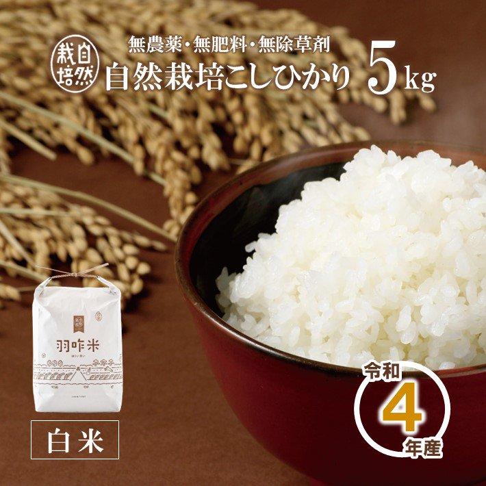 A003 令和2年産 【無農薬】能登のこだわり自然栽培こしひかり『羽咋米(白米)』 5kg