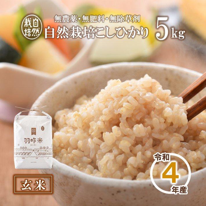 A004 令和2年産【無農薬】能登のこだわり自然栽培こしひかり『羽咋米(玄米)』 5kg