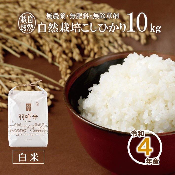 A005 令和2年産 【無農薬】能登のこだわり自然栽培こしひかり『羽咋米(白米)』 10kg