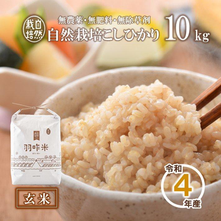 A006 令和2年産【無農薬】能登のこだわり自然栽培こしひかり『羽咋米(玄米)』 10kg