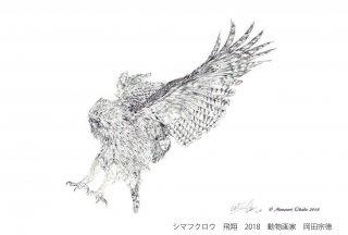 素描シマフクロウ 飛翔