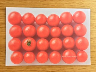 オリジナルポストカード トマト