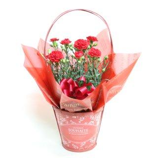 カゴ付きカーネーション花鉢