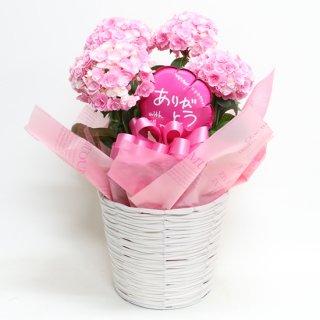 あじさいピンク花鉢