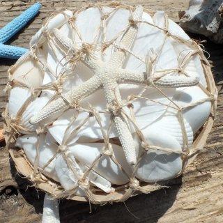 ホワイトココナッツシェルバスケット(貝殻の詰め合せ)