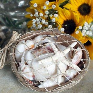 ココナッツシェルバスケット(貝殻の詰め合せ)