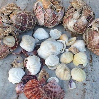 海からの贈り物 貝殻詰め合わせアソートセット OCEANS SHELL PARTS SET