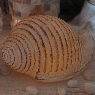 巻貝(貝殻)LED キャンドル SHELL LED CANDLE