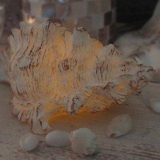 テング貝(巻き貝)LED キャンドル CONCH LED CANDLE