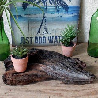 【1点もの】ドリフトウッド 海の木 流木 オブジェ/ディスプレイ「N-9」