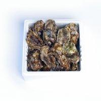 倉橋産生牡蠣殻付き30個