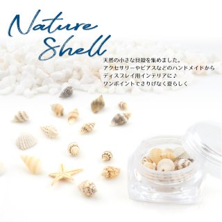 天然の小さな貝殻【ヒトデ、二枚貝、巻貝】レジン封入
