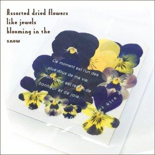 天然花材 ビオラ 密封パッケージ 押し花 ドライフラワー レジン封入