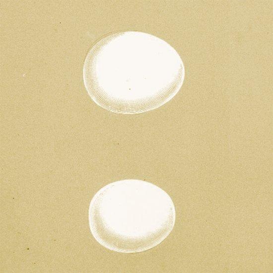 アンティークプリント フクロウの卵(WHITE/MOTTLED/LITTLE)