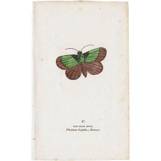 蛾・モスプリントNo.47(Bengal)