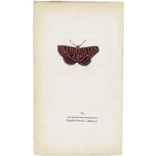 蝶々・バタフライプリントNo.22(Britain)