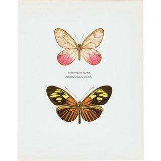 蝶々・バタフライヴィンテージプリント(41)