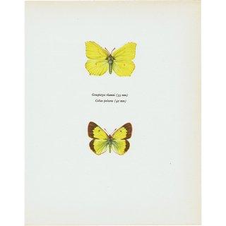 蝶々・バタフライヴィンテージプリント(103)