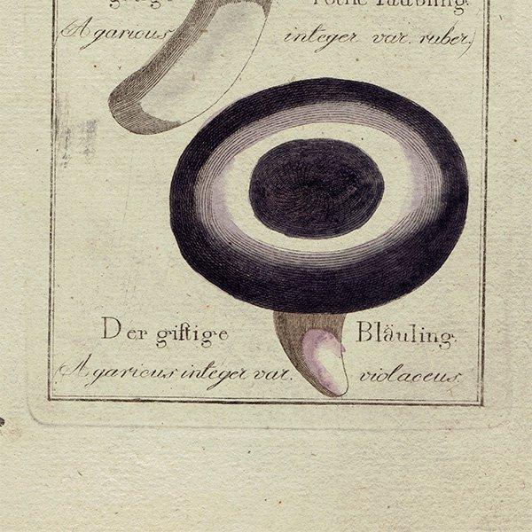 ドイツ アンティークキノコプリント 薬用 植物画0112