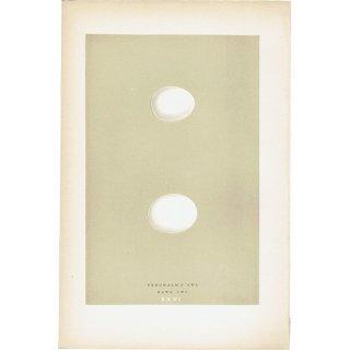 バードエッグ アンティークプリント フクロウ(TENGMALM'S OWL/HAWK OWL)の卵 0021