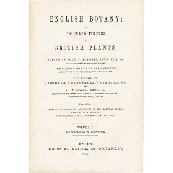 イギリス ボタニカルプリント/植物画 Camelina eu-sativa(カメリナ・サティバ). plate.141,1863JOHN EDWARD SOWERBY 0318