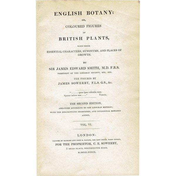 イギリス ボタニカルプリント/植物画 Trifolium scabrum(トリフォリウム・スカブルム). plate.1036,1839 JAMES SOWERBY 0445