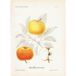 スウェーデン リンゴのアンティークボタニカルプリント(アップル) 果実学 植物画 0454