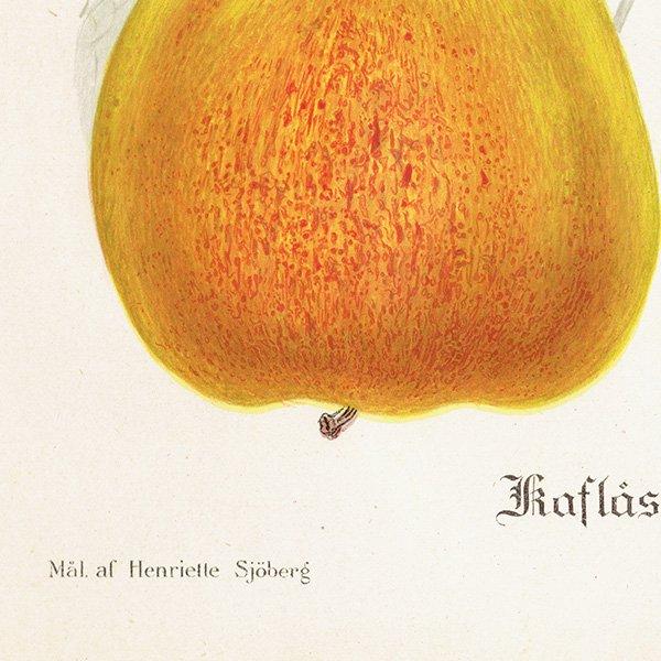 スウェーデン リンゴのアンティークボタニカルプリント(アップル) 果実学 植物画 0464
