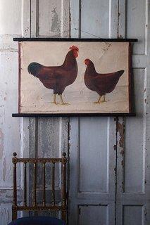相対した鶏-vintage poster