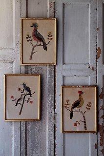 極彩色の鳥の額縁-feather bird frame