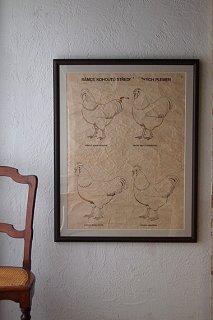 ニワトリ、畜産学の大きな額縁-vintage poster large frame