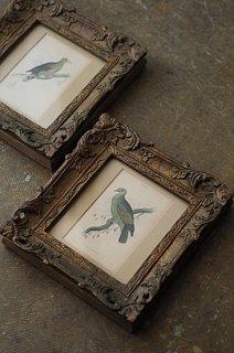 山鳩の銅版画フレーム-antique engraving/etching frame