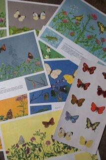 ユニークな蝶のポスター-butterfly poster