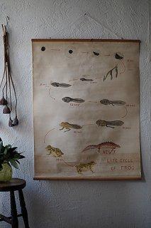 自然科学ポスター-vintage biology poster