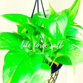 【食品】life force salt (125g)