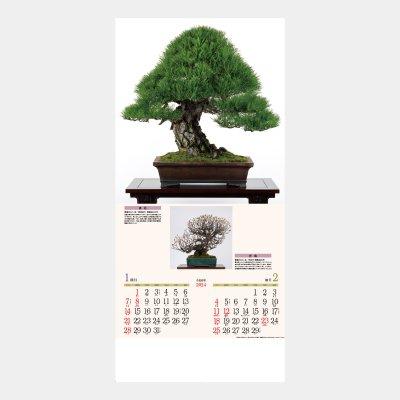 ND-115  銘樹 (盆栽)