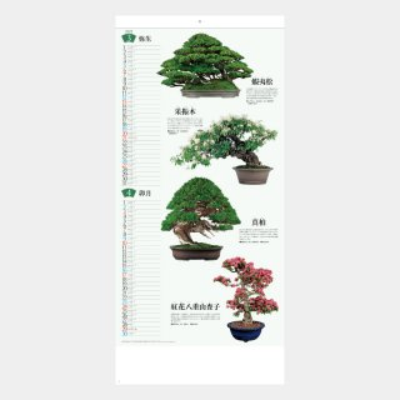 SB-143(NK-152)  盆栽