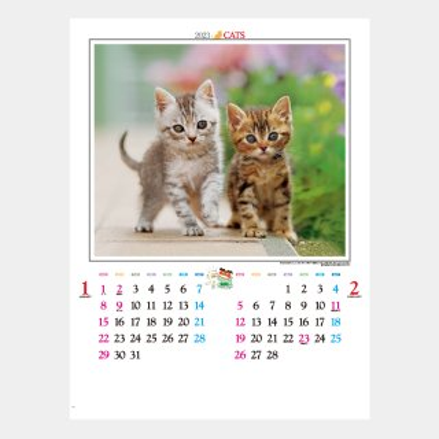 IC-201  かわいい猫
