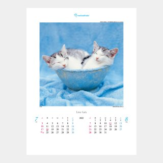 <img class='new_mark_img1' src='https://img.shop-pro.jp/img/new/icons51.gif' style='border:none;display:inline;margin:0px;padding:0px;width:auto;' />TD-934 ラヴ・キャット〜レイチェル・ヘイル作品集〜