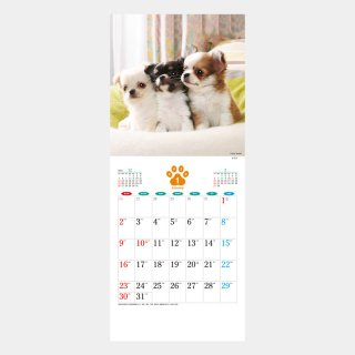 <img class='new_mark_img1' src='https://img.shop-pro.jp/img/new/icons51.gif' style='border:none;display:inline;margin:0px;padding:0px;width:auto;' />SA-20  THE DOG's