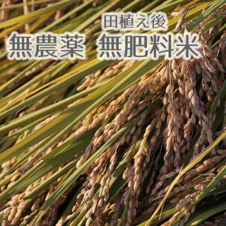 むすび米(無肥料無農薬)