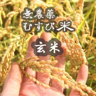 むすび米(無農薬)玄米