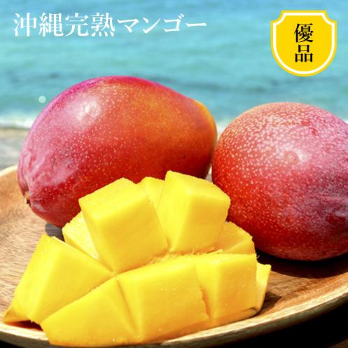 産地直送 沖縄マンゴー (優)1�(2~3玉)【終了間近】