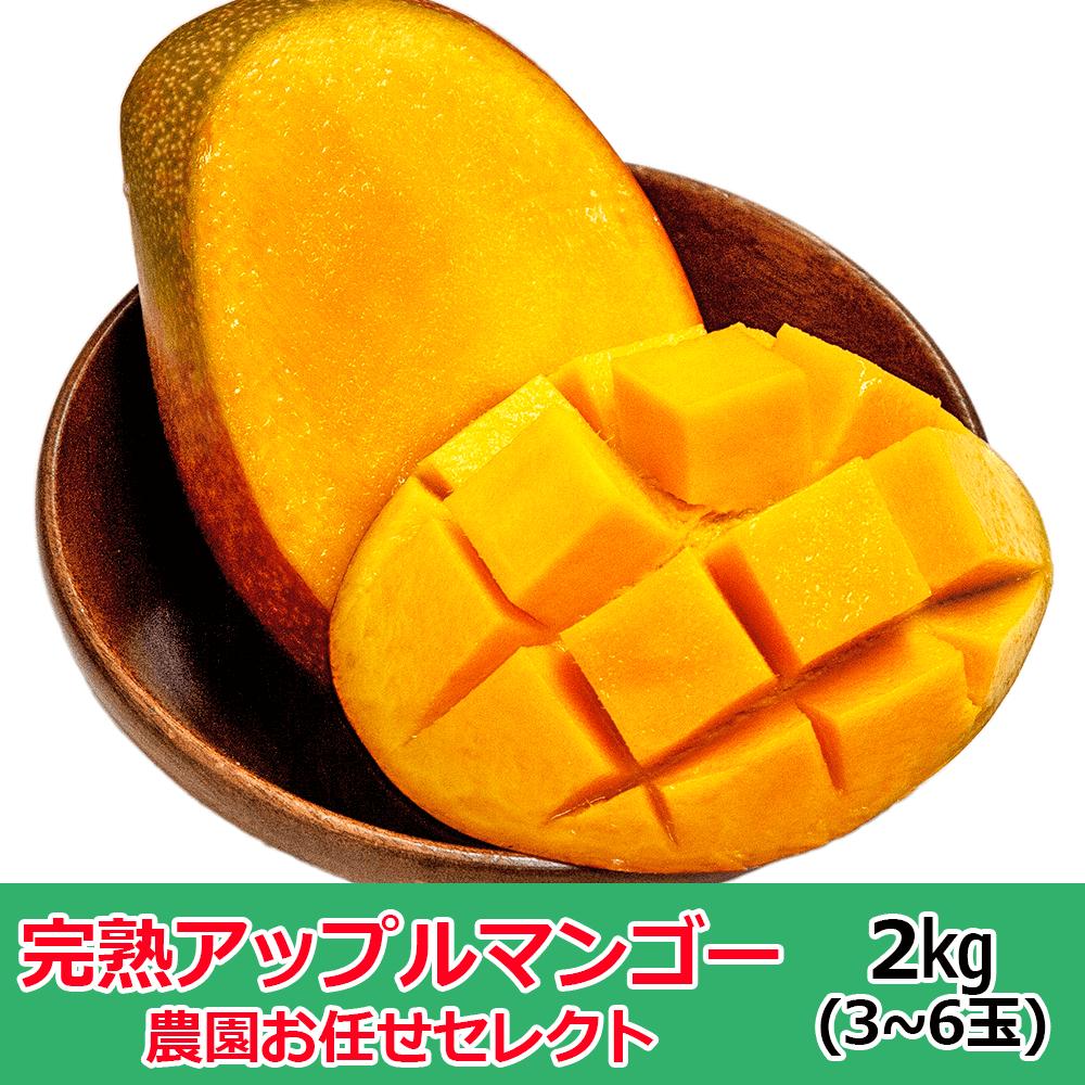 【2021年先行予約】 産地直送 沖縄マンゴー 農園おまかせセレクト2�(3~6玉)※サイズにバラつきがあり多少形や色見が良くない物がございますが味は変わりありません。【7月中旬以降発送】