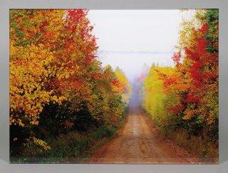 秋の赤い道(0467)