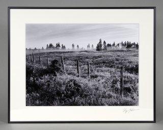 朝の草原(0555)