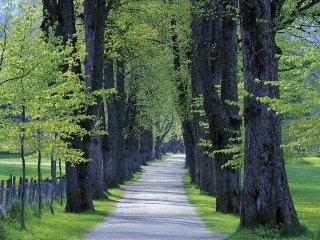 新緑の道(Norway,Voss)