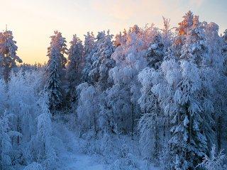 冬の森(Finland,Ranua)